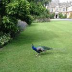 A Corsham bird