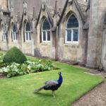 A new friend at Corsham Court